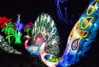 magical-lantern-festival-64-1000x675